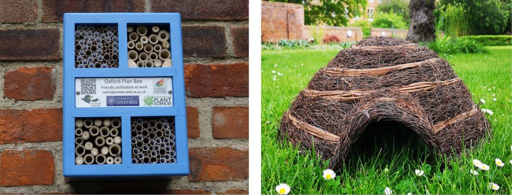 Bee hotel and hedgehog igloo